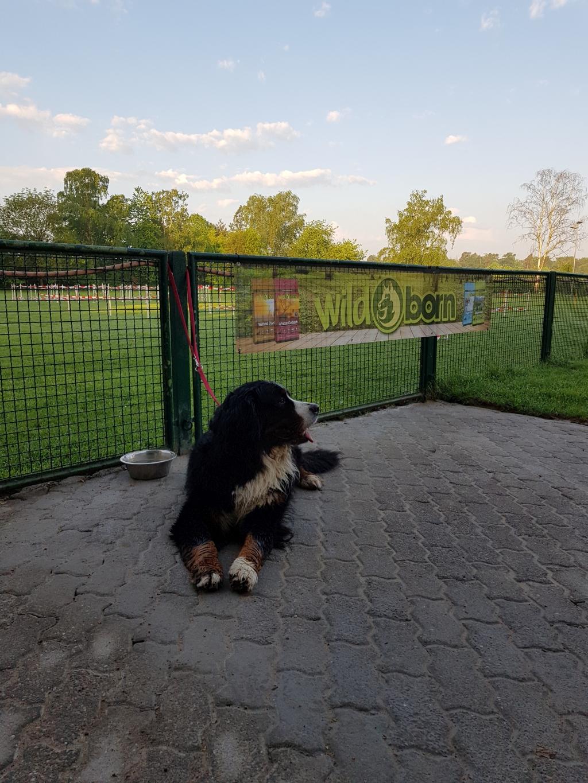 Zughundeprüfung_29_04_2018_007