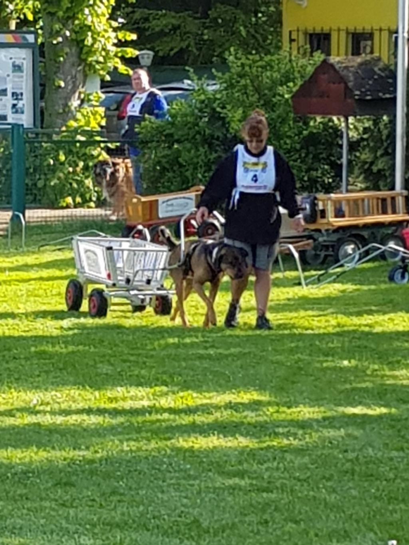 Zughundeprüfung_29_04_2018_068