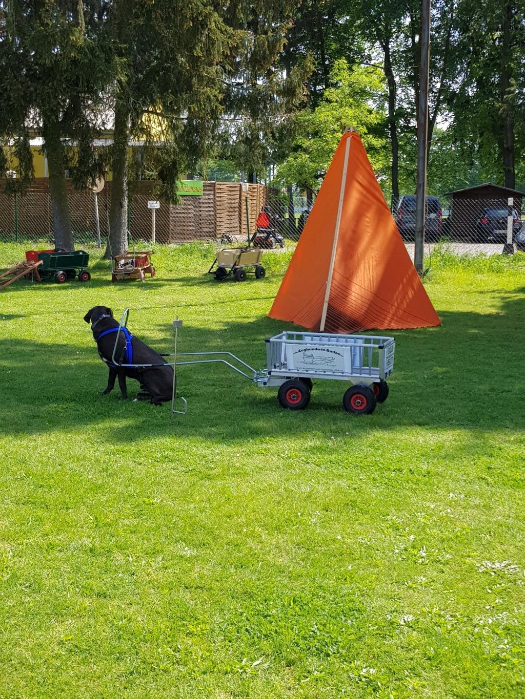 Zughundeprüfung_29_04_2018_133