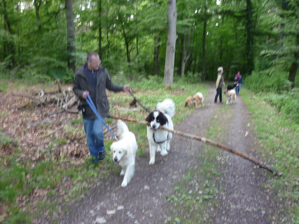 Ausflug Alltagsgruppe Tierpark Forst 05.13 029