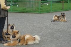 Ausflug Alltagsgruppe Tierpark Forst 05.13 010