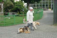 Ausflug Alltagsgruppe Tierpark Forst 05.13 012