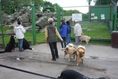 Ausflug Alltagsgruppe Tierpark Forst 05.13 017