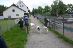 Ausflug Alltagsgruppe Tierpark Forst 05.13 021