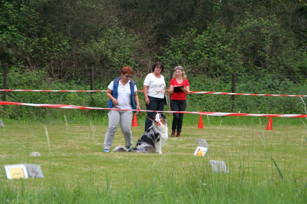 Rally_Obedience_Yvonne_2015_05_17_10