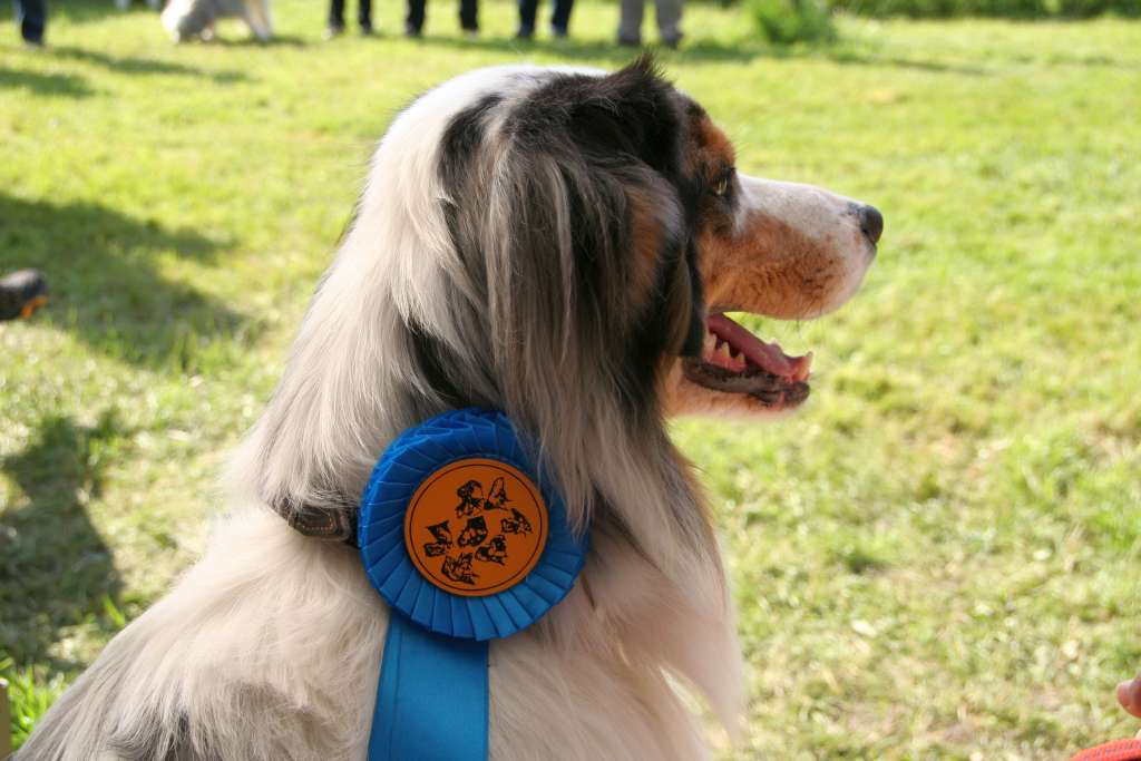Rally_Obedience_Yvonne_2015_05_17_36