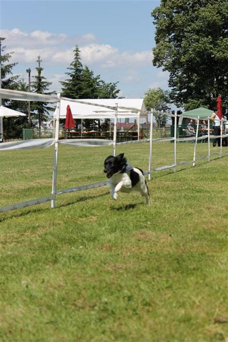 Sommerfest_2012_012