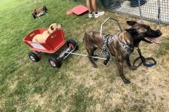 Zughund Training 2019.07.06