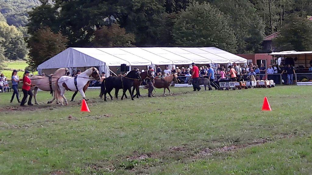kutscherfest2017 047