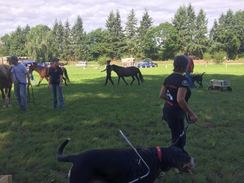 Zughunde_Training_in_Bruchhausen_05_08_2017_004