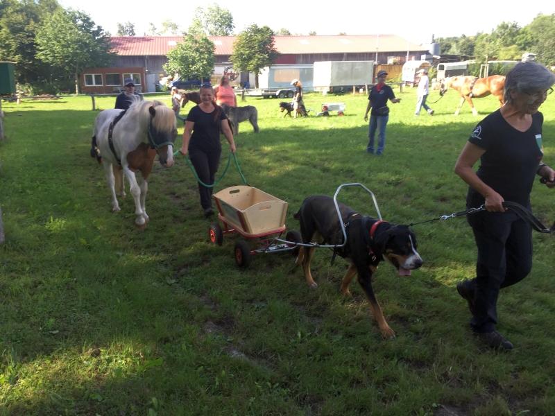 Zughunde_Training_in_Bruchhausen_05_08_2017_009