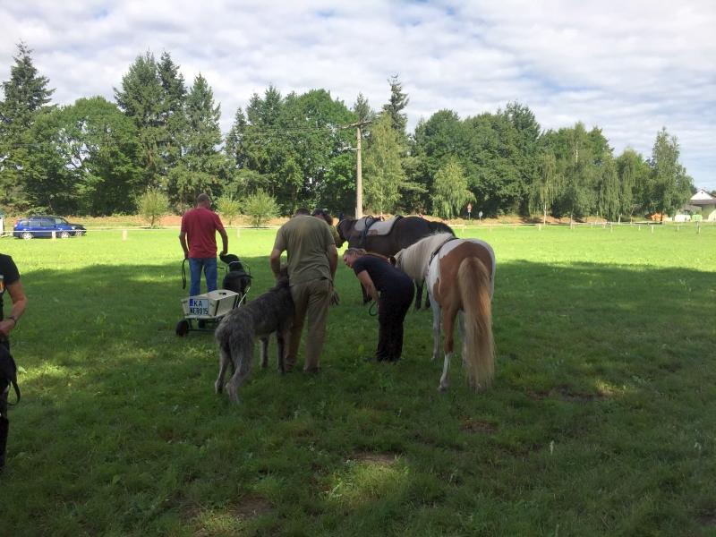 Zughunde_Training_in_Bruchhausen_05_08_2017_017