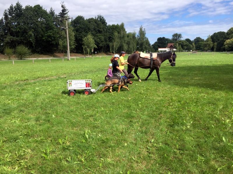 Zughunde_Training_in_Bruchhausen_05_08_2017_040