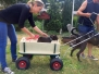 Zughunde Training 24.06.2017