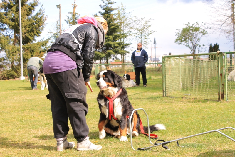 Zughundeprüfung_2012_020