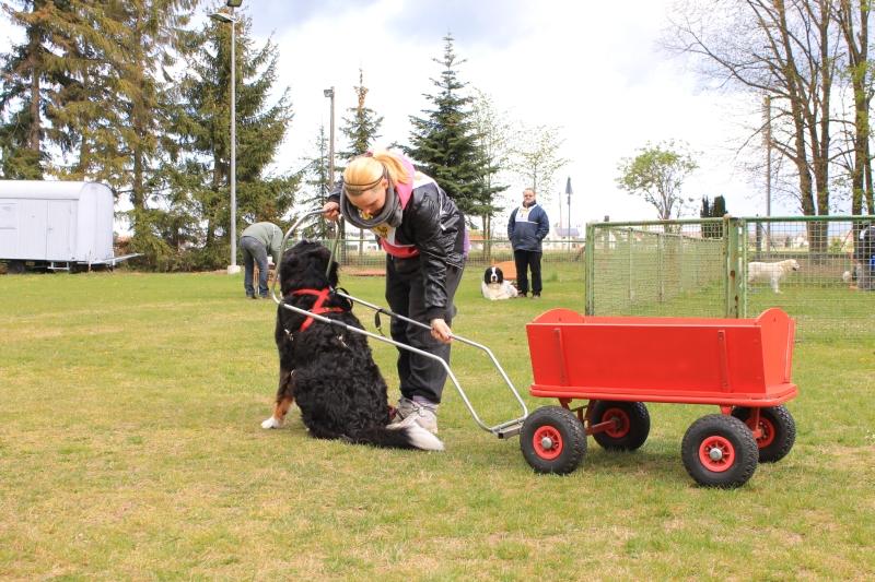Zughundeprüfung_2012_021