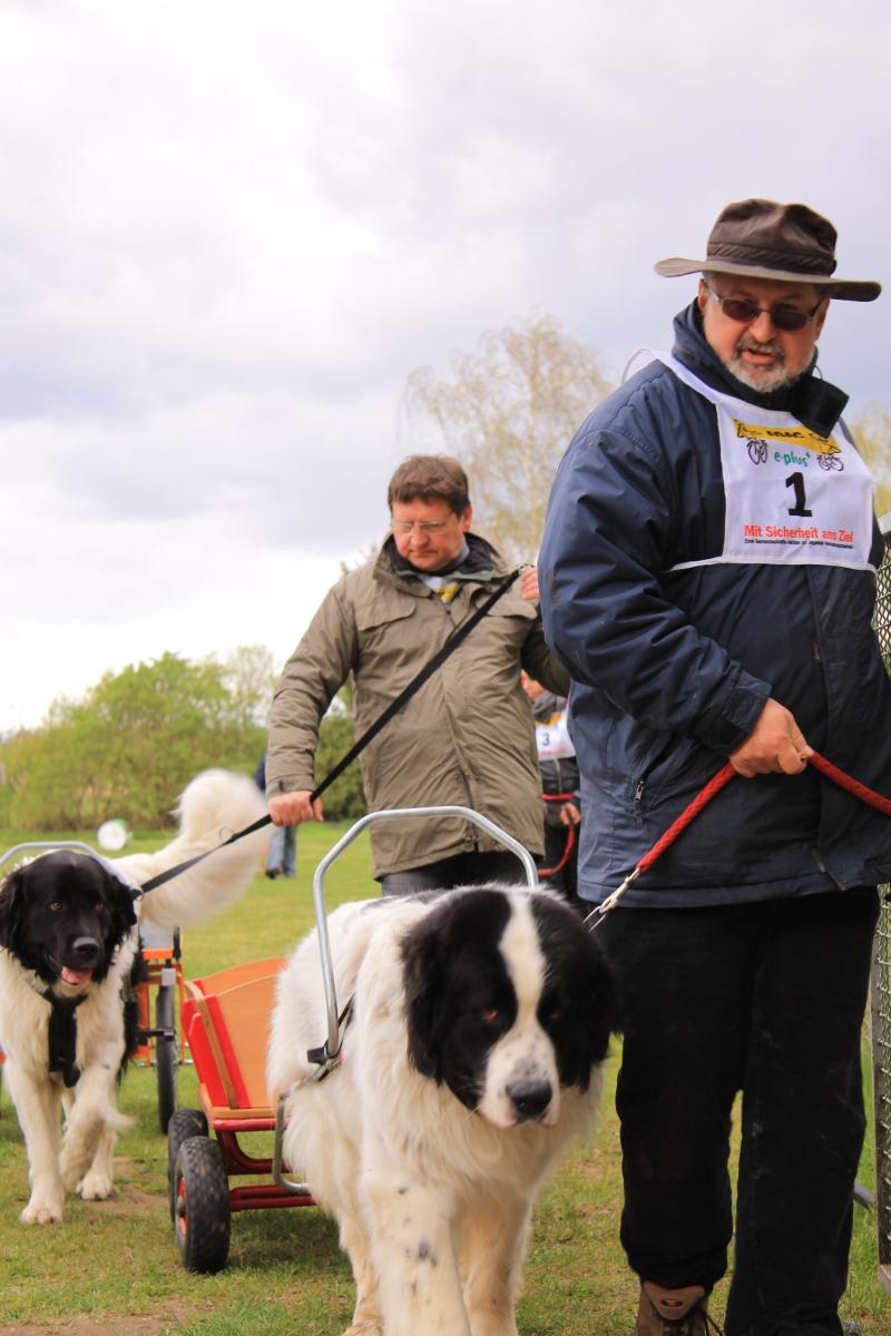 Zughundeprüfung_2012_036