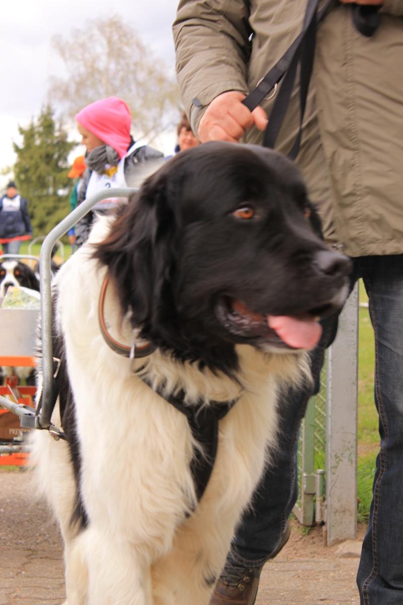 Zughundeprüfung_2012_038