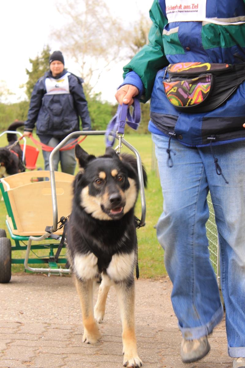Zughundeprüfung_2012_041