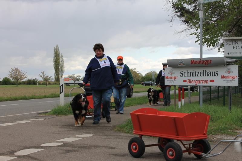 Zughundeprüfung_2012_048