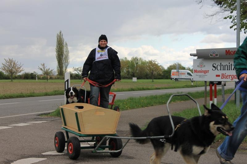 Zughundeprüfung_2012_050
