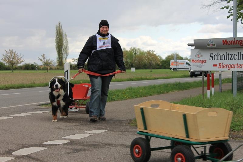 Zughundeprüfung_2012_051