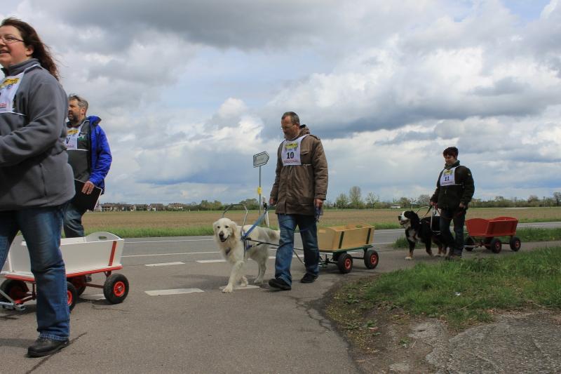 Zughundeprüfung_2012_070