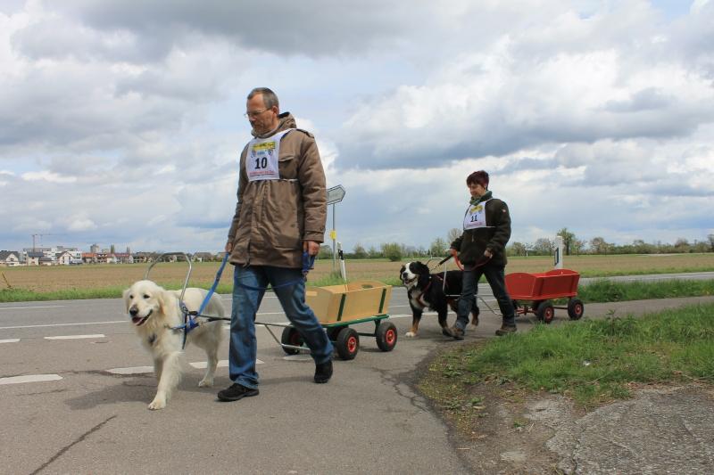 Zughundeprüfung_2012_071