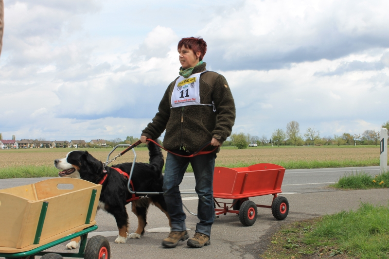 Zughundeprüfung_2012_072