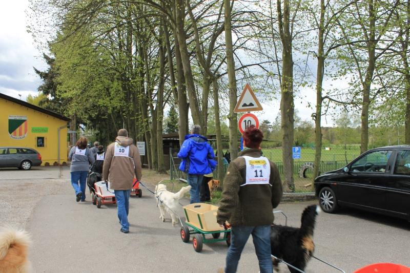 Zughundeprüfung_2012_074
