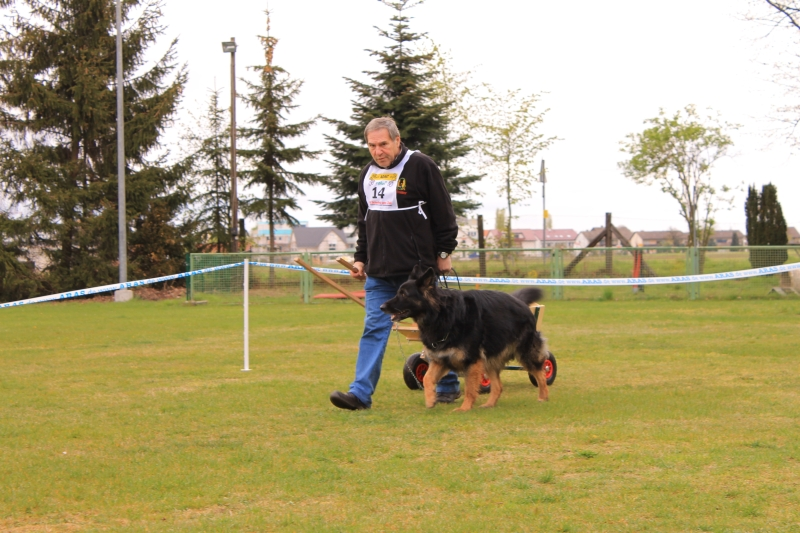 Zughundeprüfung_2012_087