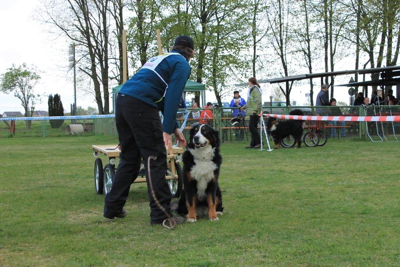 Zughundeprüfung_2012_125