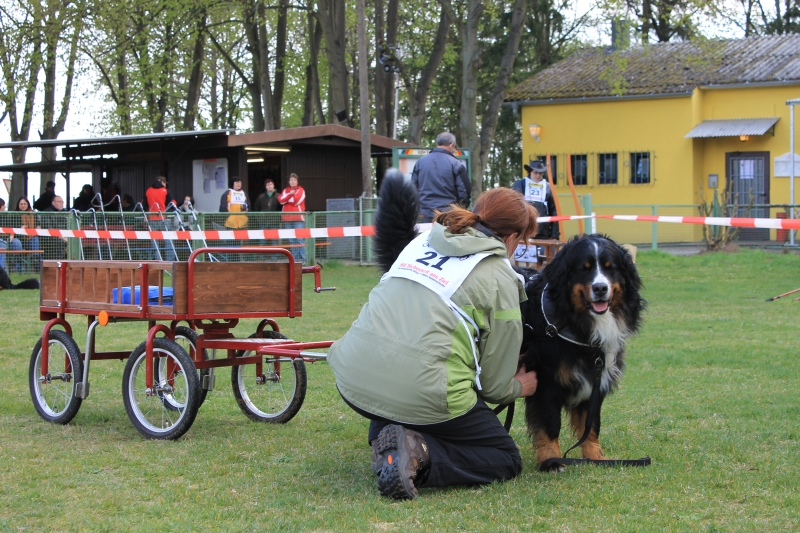 Zughundeprüfung_2012_131