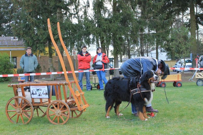 Zughundeprüfung_2012_136