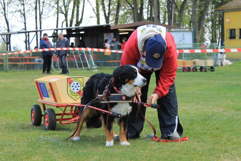 Zughundeprüfung_2012_139