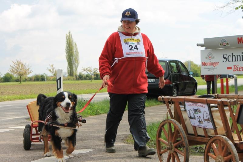 Zughundeprüfung_2012_154