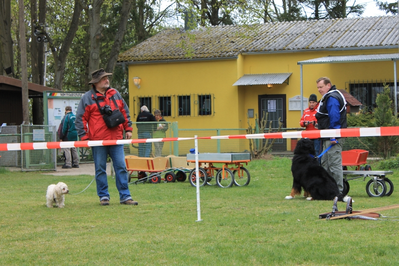 Zughundeprüfung_2012_157