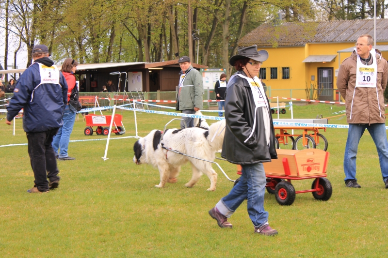 Zughundeprüfung_2012_160