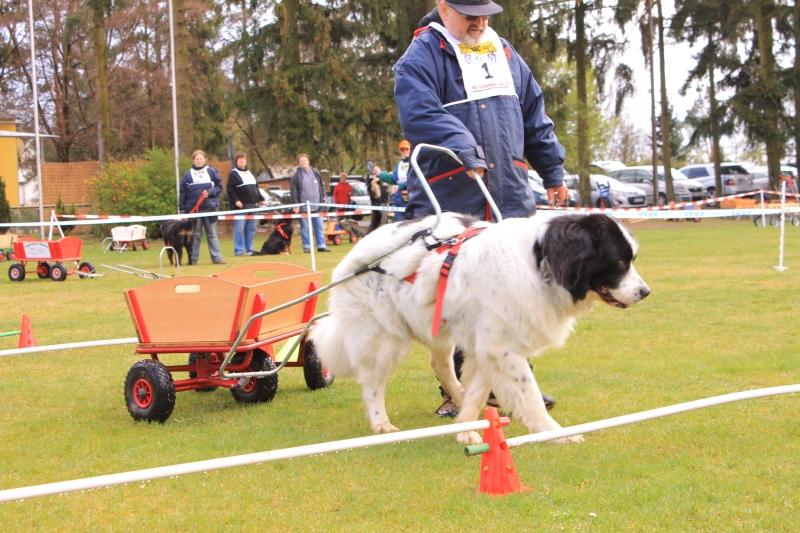 Zughundeprüfung_2012_161