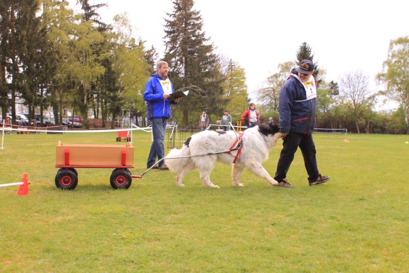 Zughundeprüfung_2012_162