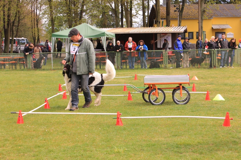 Zughundeprüfung_2012_173