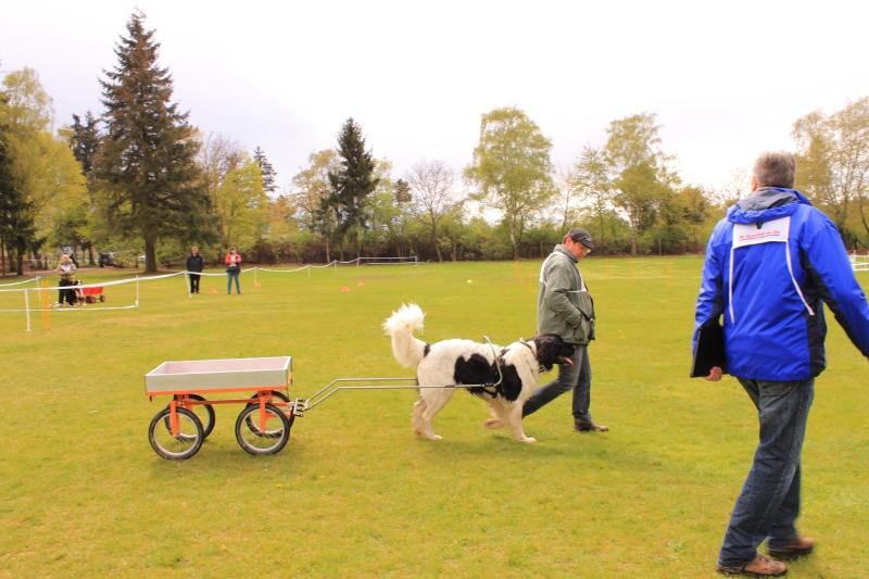 Zughundeprüfung_2012_176