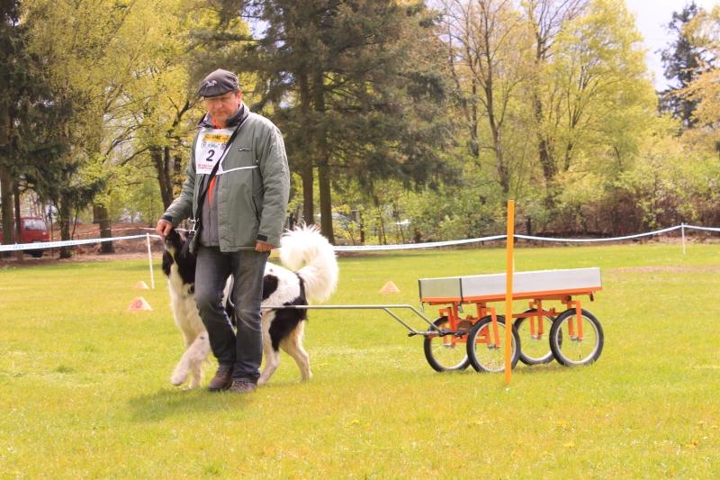 Zughundeprüfung_2012_184
