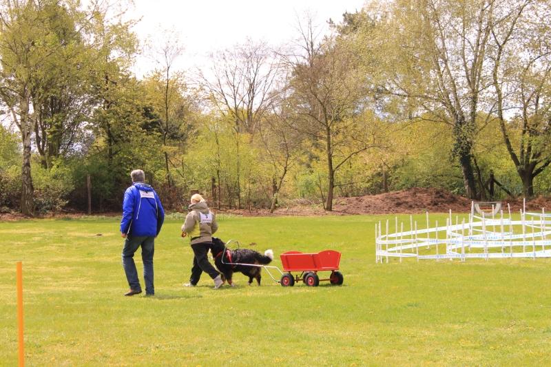 Zughundeprüfung_2012_190