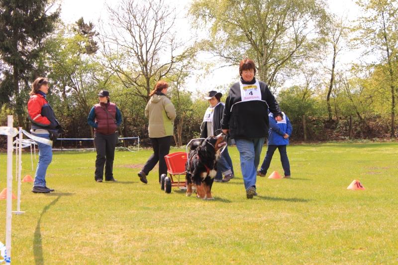 Zughundeprüfung_2012_202