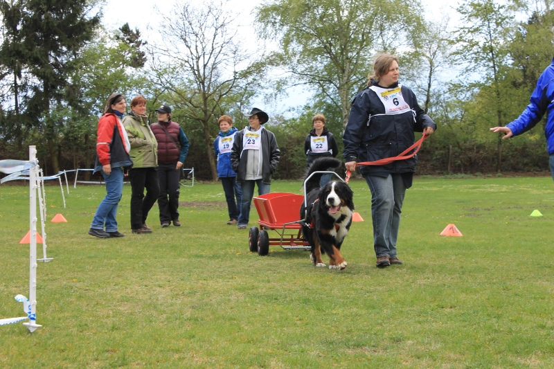 Zughundeprüfung_2012_217