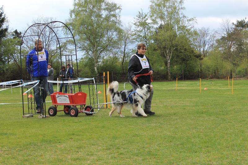 Zughundeprüfung_2012_227