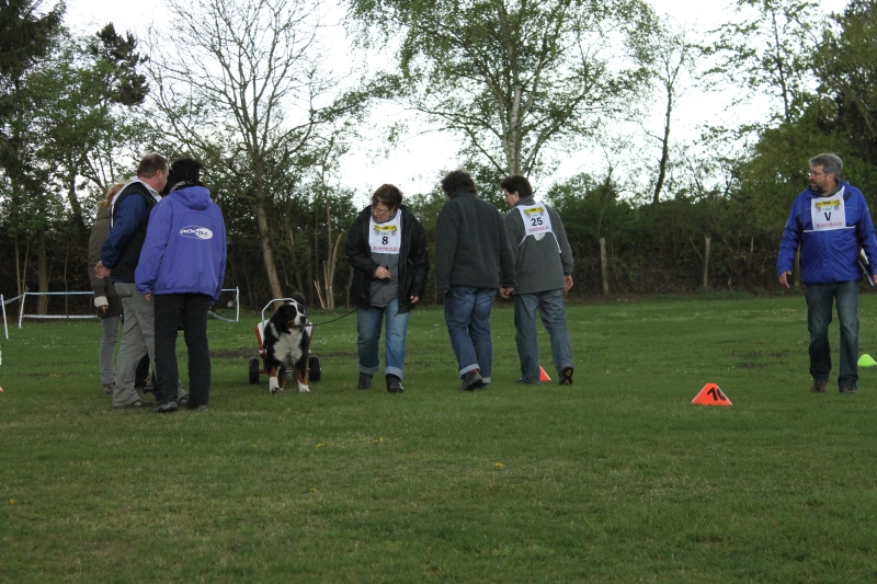 Zughundeprüfung_2012_238