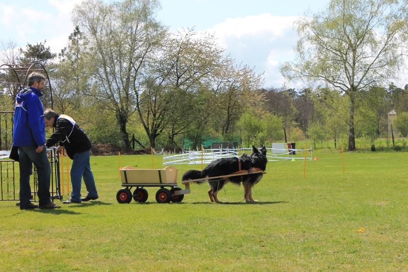 Zughundeprüfung_2012_278