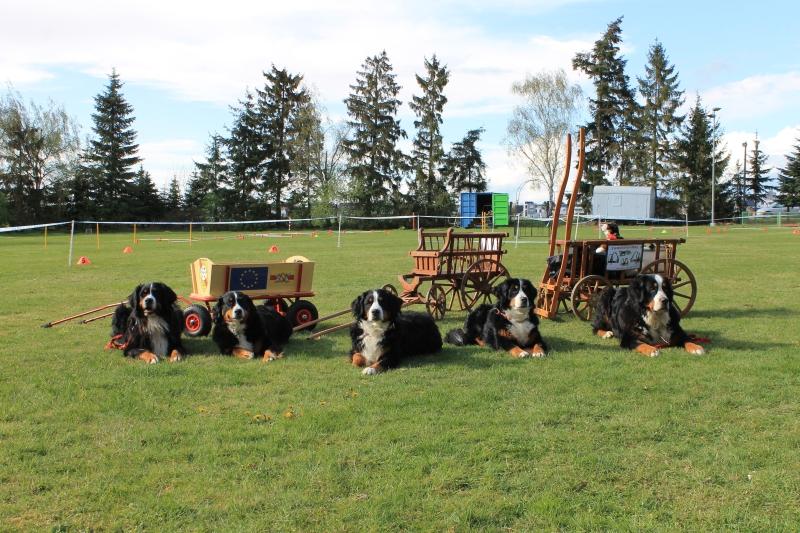 Zughundeprüfung_2012_287